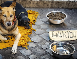 Hungry Shelter Pets Fed by SPCA International Supporters