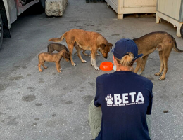 Beirut Disaster Response–SPCA International Partners Spring Into Action