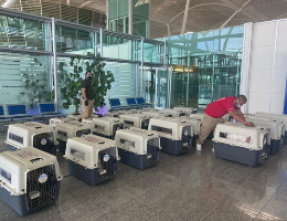 Operation Baghdad Pups: Worldwide Rescue Flight Behind the Scenes – Iraq to New York