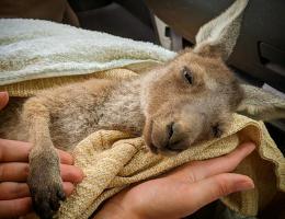 Australian Bushfires – One Year Later