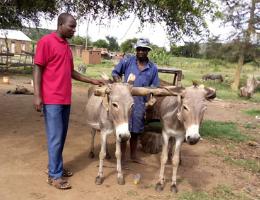 Saving Donkeys from Starvation