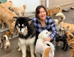 World of Angels Foundation: Rescuing Pups from the Dog Meat Trade