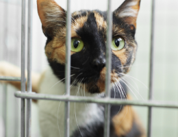 Adopt a Shelter Cat Month!