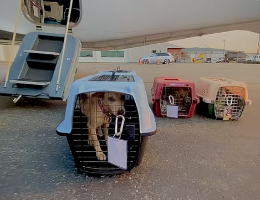 Pet Rescue Pilots: Rescuing by Relocation